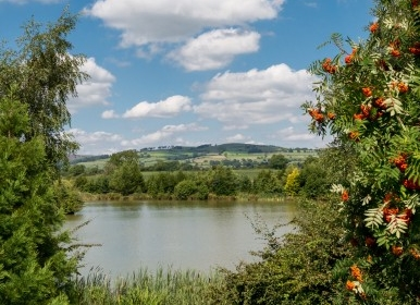 Exclusive free fishing for owners on a three-acre lake that is well stocked with coarse fish