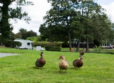 Shrewsbury Ducks
